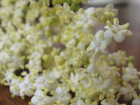 smelderflowers0005.jpg