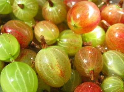 smgooseberries0002.jpg