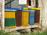 Slovenian beehives0002.jpg