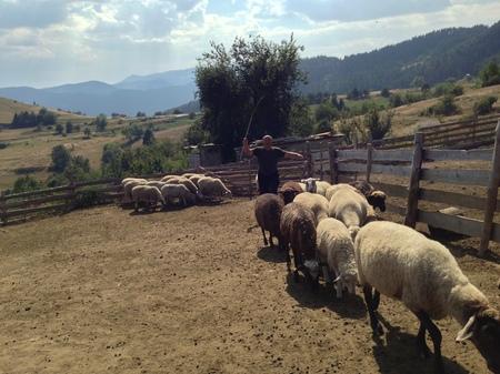 herding.JPG