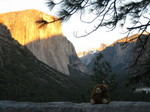 bear-in-yosemite.jpg
