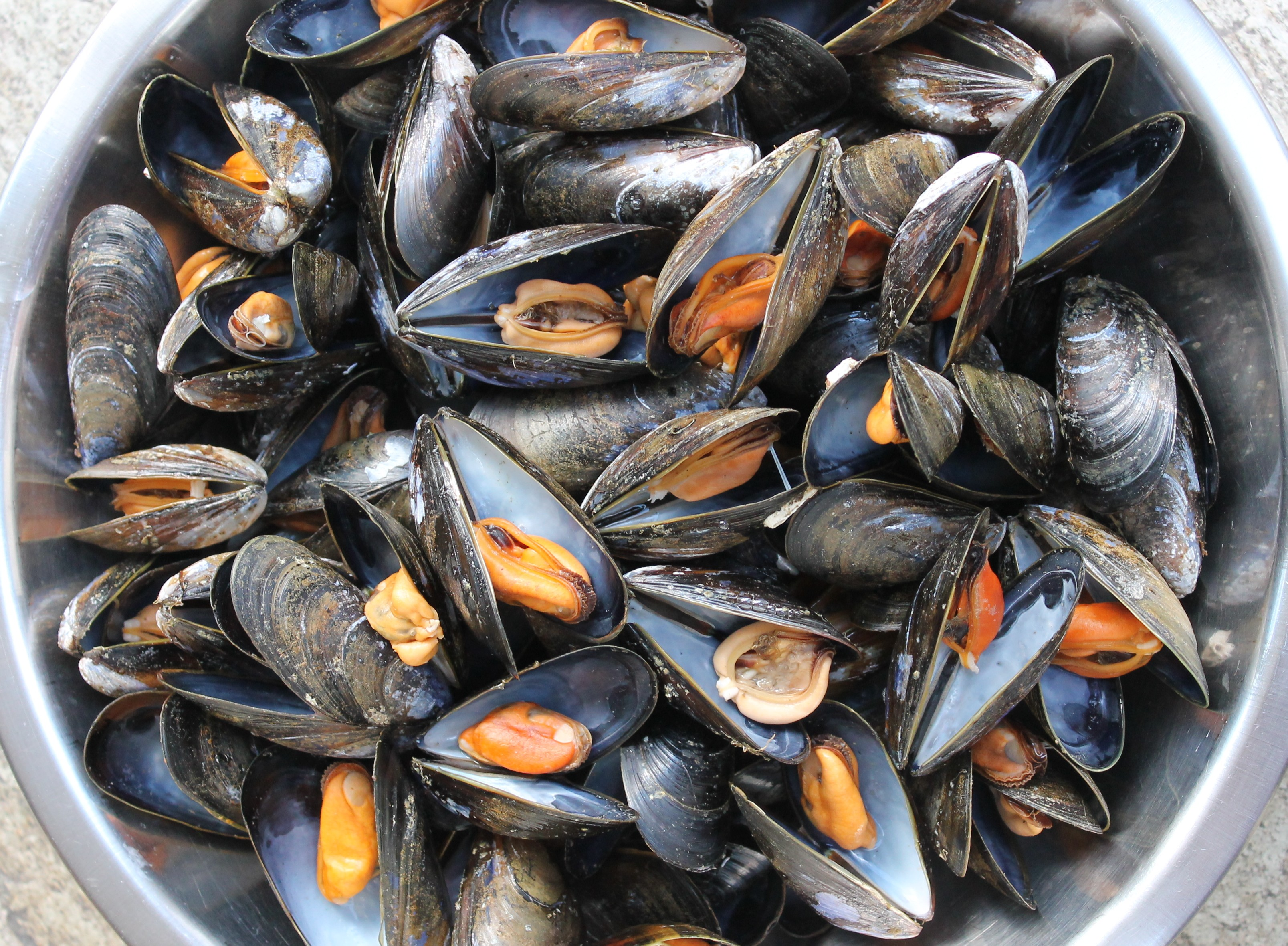 Shellfish & Seafood masterclasses, Sat 27th & Sun 28th Feb 2016